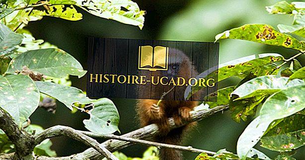 Fakta Titi opice - zvířata jižní Ameriky