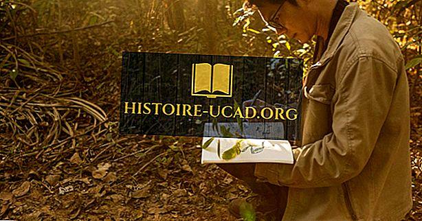 Một nhà thực vật học là gì? - Histoire-Ucad.org