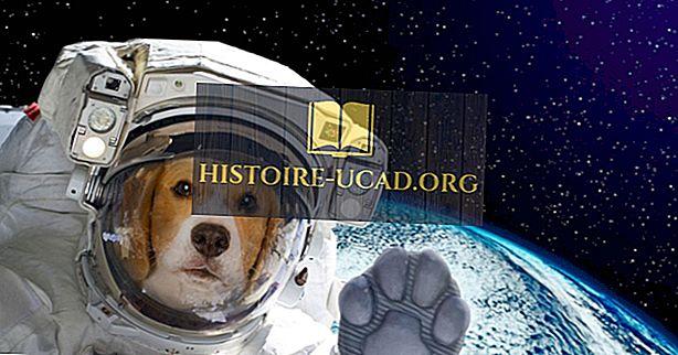 Les premiers animaux dans l'espace