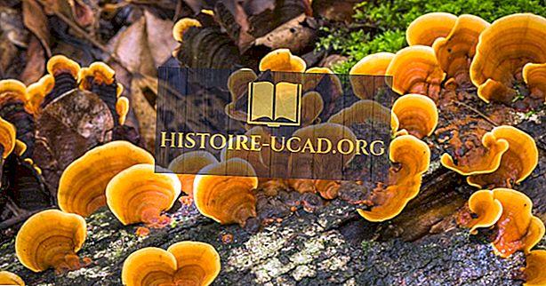 Ravim seened: ajalugu ja kasutusalad