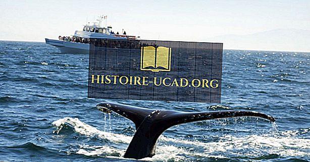 Najboljše destinacije za opazovanje kitov na svetu
