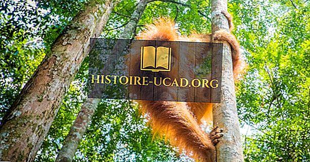 أفضل الأماكن في العالم لمشاهدة القرد في بيئتها الطبيعية