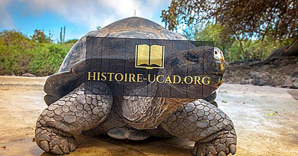 Cele mai bune locuri din lume pentru a vedea tortoage uriașe în mediul lor natural