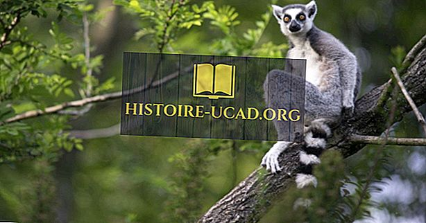 Qu'est-ce que Madagascar est le plus célèbre?