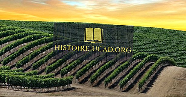 Kje je dolina Napa in zakaj proizvaja tako dobro vino?