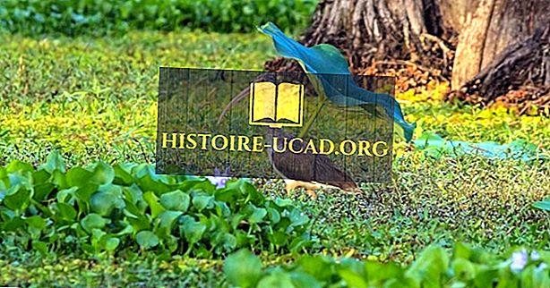 Voyage - Le lac Caddo Et La Forêt Inondée - Des Lieux Unique Au Texas
