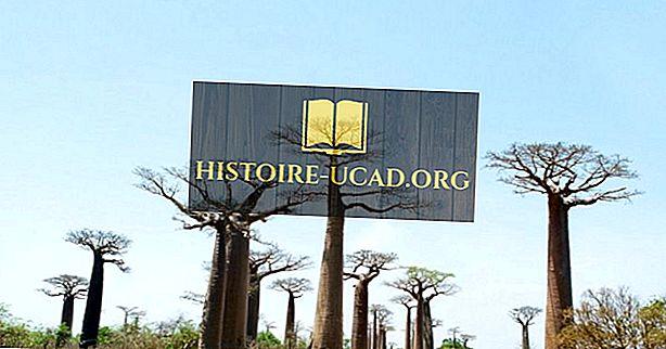 Avenue Of The Baobabs - Unike steder av Madagaskar