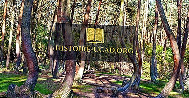 Den skæve skov - Unikke steder i Polen