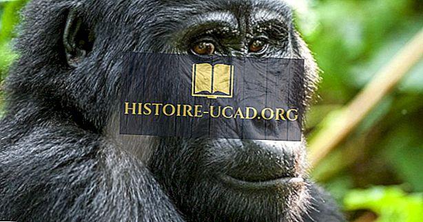 Sites du patrimoine mondial en péril en République démocratique du Congo