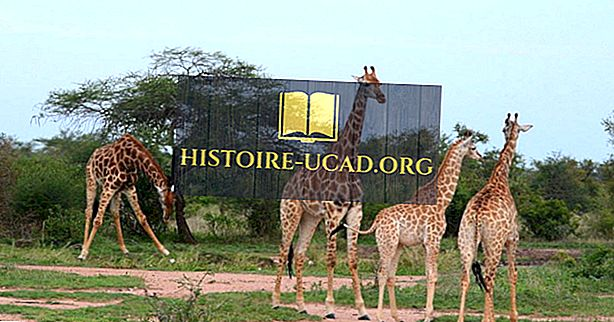 Najczęściej odwiedzane kraje w Afryce