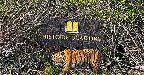 Seznam světového dědictví UNESCO v Bangladéši