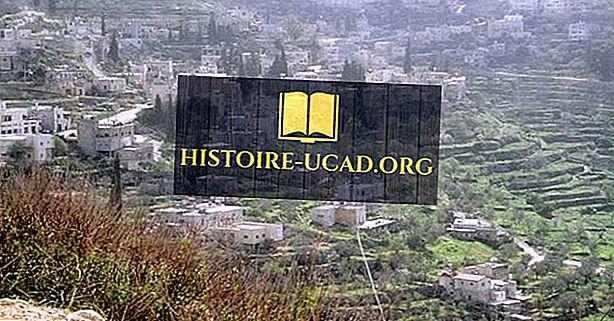 Land af oliven - Battir Groves og Vineyards of Palestine