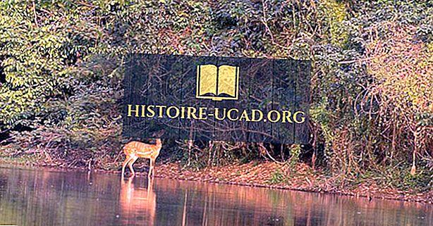 UNESCO-ve svjetske baštine u Obali Bjelokosti (Obala Bjelokosti)