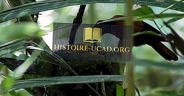 UNESCO Pasaulio paveldo objektai Madagaskare