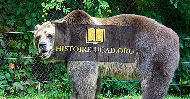 Grizzly a Wolf Discovery Center, Montana - Unikátne miesta po celom svete