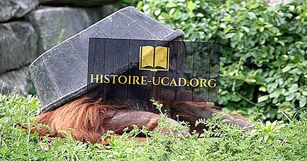 Najstarejši živalski vrtovi v Združenih državah