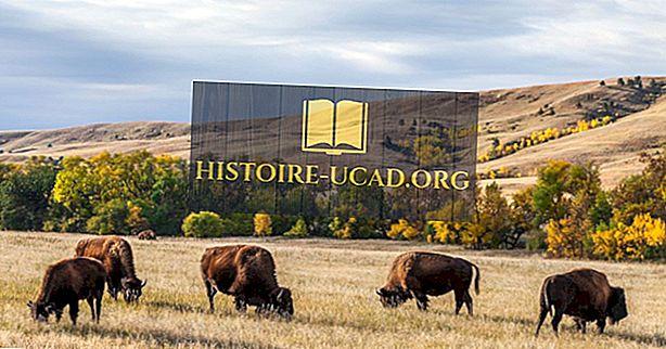 Custer valstijos parkas, Pietų Dakota - unikalios vietos visame pasaulyje
