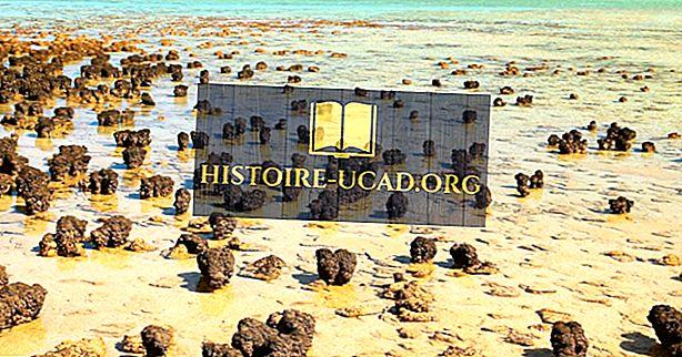 Shark Bay: Tapak Warisan Dunia UNESCO Di Australia