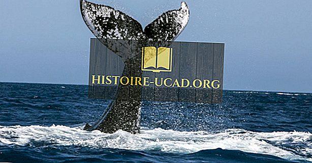 5 najboljših krajev za ogled kitov v Kanadi to poletje