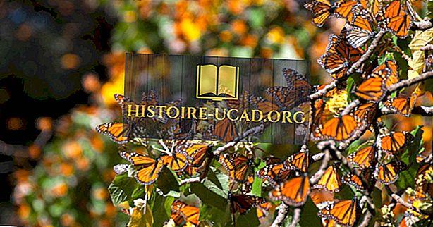 """Биосферният резерват """"Пеперуда на монарха"""": обект от световното наследство на ЮНЕСКО в Мексико"""
