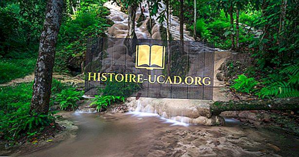 O que é tão único sobre as cachoeiras pegajosas Bua Tong da Tailândia?