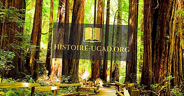 La forêt de séquoias - lieux uniques autour du monde