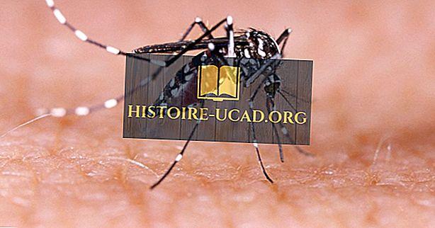 Kaj je denga groznica?  - Bolezni sveta