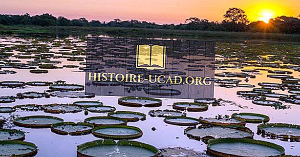 Di manakah kawasan semulajadi Pantanal terletak?