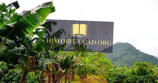 Les principaux producteurs mondiaux de bananes plantain