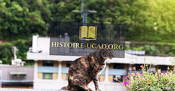 Houtong Cat Village - Unike steder rundt om i verden