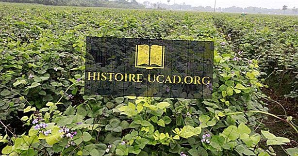 Jakie są główne zasoby naturalne Bangladeszu?