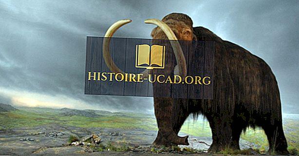Byly vlněné mamuti stále potulné po částech Země, když byly postaveny velké pyramidy?