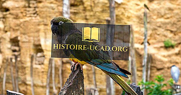 Mis on Kakapo lind?