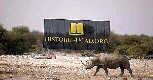 متى انقرضت وحيد القرن الأفريقي في غرب إفريقيا؟