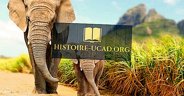 Missä norsut elävät?