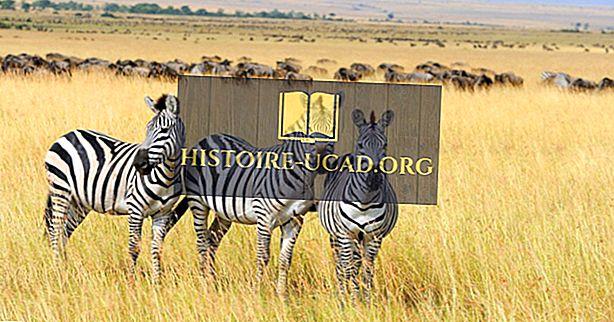 Kur gyvena zebras?