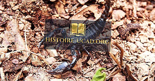 Шта је највећи шкорпион на свету?