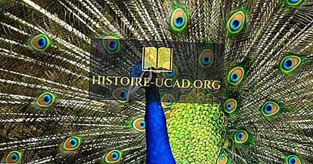 Czym jest Narodowy Ptak Indii?