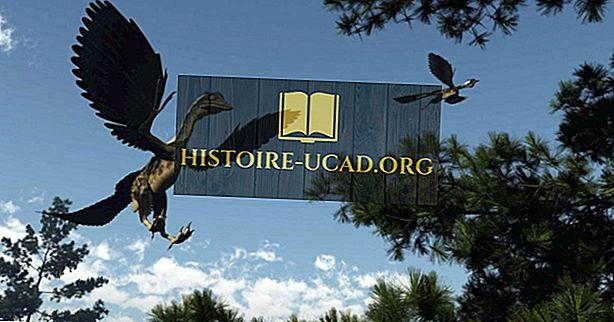 Har dinosaurer hatt fjær?