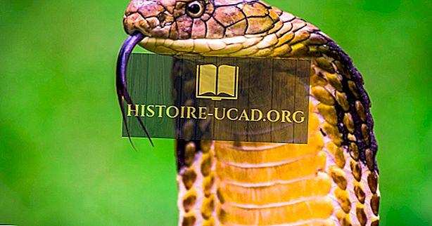 Ar gyvatės ropliai?