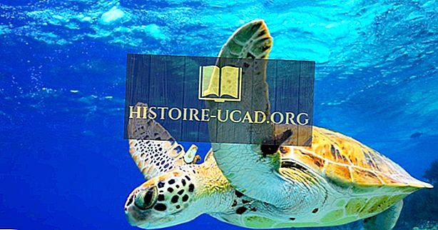 Jsou želvy obojživelníci?