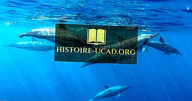 ¿Cuántos tipos diferentes de delfines hay?