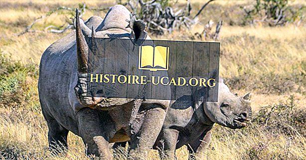 Combien y a-t-il de rhinos sur terre?