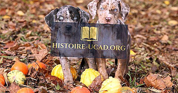 Apakah anjing negara bagian Louisiana?