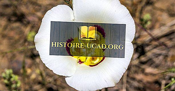 ユタ州の州の花は何ですか?