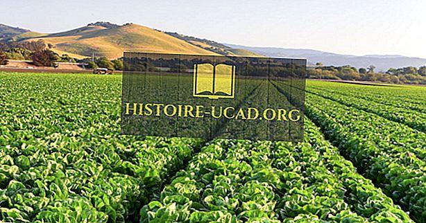 Kokia vieta žinoma kaip pasaulio salotų dubuo?