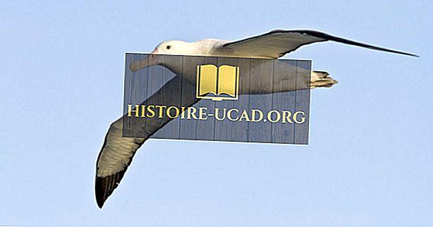 Aký je najväčší svetový druh Albatrossu?