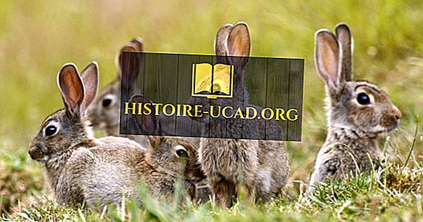 Gdje zečevi žive?