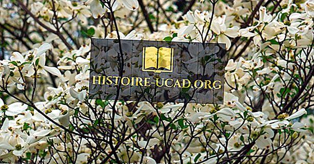 버지니아 주립 꽃은 무엇입니까?