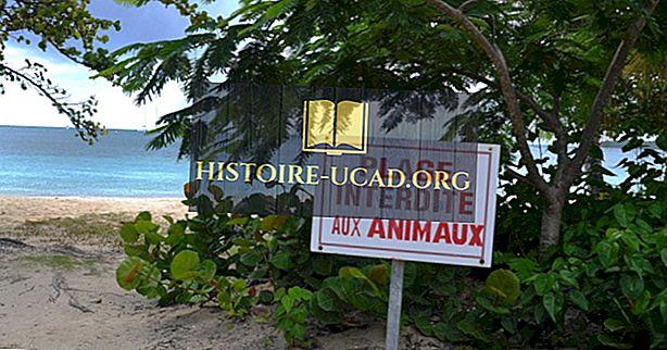 Francoske države na Karibih